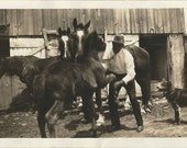 Nice to Meet You - Vintage 1930s Man, Horses, Foal and Dog Photograph