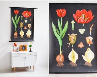 Tulip print, botanical poster, pull down chart, Jung Koch Quentell, school poster, flower poster Ref: 284
