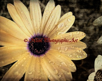 Rustic Raindrops on Yellow African Daisy Country Kitchen Art Matted Picture A786 yellow purple