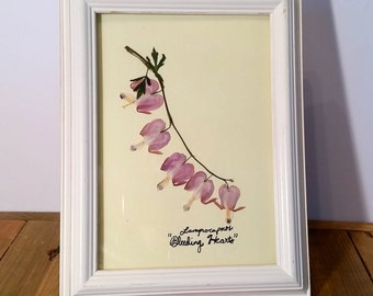 Bleeding Hearts Pressed Flower Art