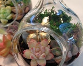 Butterfly Miniature Hand Blown Glass Terrarium Garden Gift