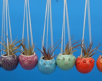 Large, Hanging Puffer Fish Planters, Air Plants, Succulents