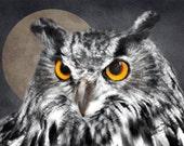 wildlife art print, wildlife print, wildlife photography, wildlife picture, bird print, bird art, wildlife painting, wildlife, eagle owl