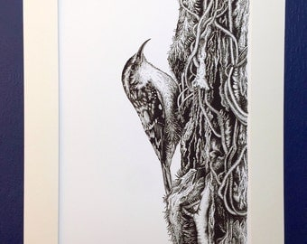 Treecreeper - Art Print from an original ink drawing. Black and white print. Contemporary wall art.