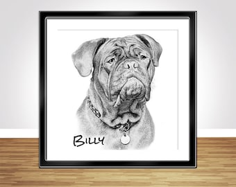 Custom Pet Sketch - Dog portrait -  Digital Sketch - sketch from photo - Dogue de Bordeaux - Bordeaux Mastiff Art - digital sketch portrait