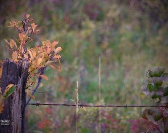 billi j miller photography - Fall photograph, autumn photograph, rustic, autumn, fall, home decor, office decor, prairies