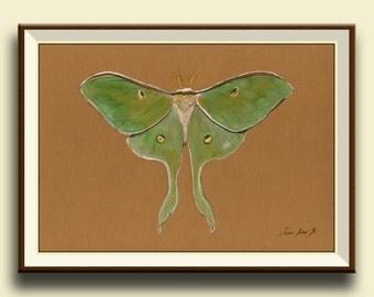 PRINT-Luna moth - Actias luna moth - insect art drawing  print watercolor painting art wall moth-Print by Juan Bosco