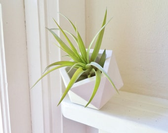 Geometric icosahedron planter, modern planter, air plant holder, 3 inch geometric planter