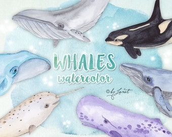 Whales Watercolor - clipart elements - PNG file