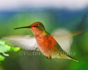 hummingbird nature photography fine art photo print wall art matted