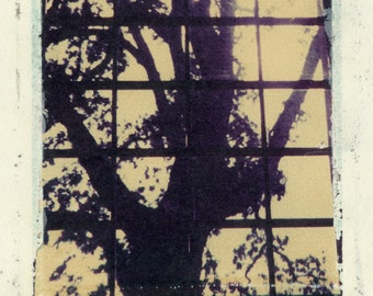 Original Polaroid image transfer print, silhouette of tree in window frame, one of a kind - free US shipping