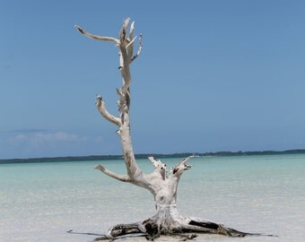 Photography, Bahamas, 8 x 10 Color Photograph, Suitable for Framing