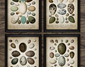 Bird Egg Print Set of 4 - Vintage Bird Egg Book Plate Art - Eggs - Digital Art - Printable Art - Set Of Four Prints #183 - INSTANT DOWNLOAD