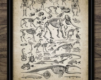 Fossil Print - Evolution Print - Paleontology Decor - Fossil Record Poster - Geology Student Gift - Single Print #1233 - INSTANT DOWNLOAD