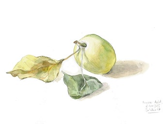 Apple watercolor drawing - PRINT of apple frui - Green apple still life drawing by Catalina S.A.
