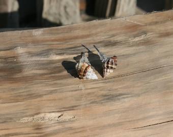 Real Sea shell earrings