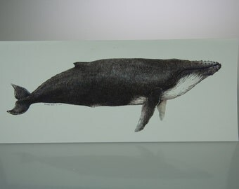 Big Humpback Whale card, oversized card with nature whale art print, blank inside
