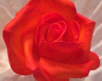 Gum Paste Rose in Orange