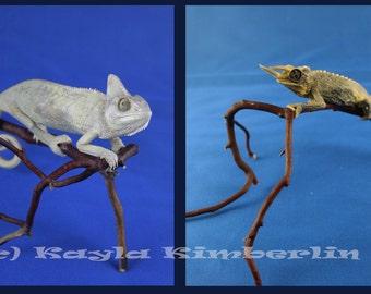 Taxidermy Chameleon