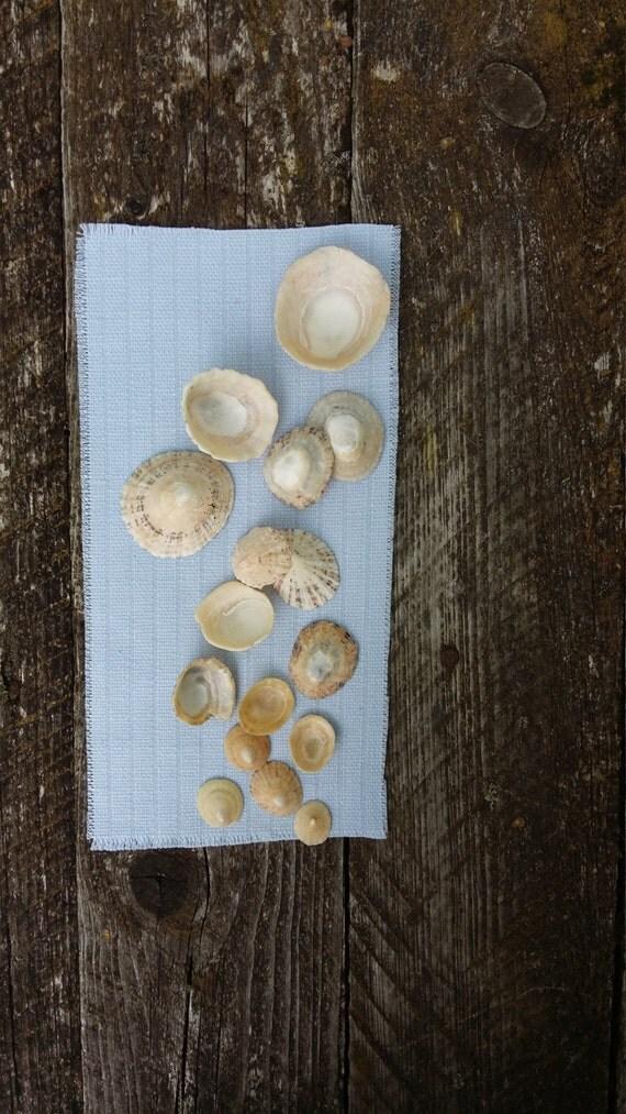 Beach Sea Shells Decor Set Natural Supply Collection Irish Sea Coastal Wedding Or Home Decor