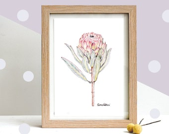Botanical Art Print,  Australian Souvenir, Mother's Day Gift, Drawing of a Native Protea Flower | Limited Edition of 20 Giclee Art Print