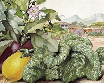 1949 Botanical Art Print - Else Bostelmann Watercolor - Indian Vegetable Garden - Indian Mustard - Purple Eggplant - Vintage Illustration