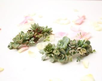 Succulent Botanical Hair Comb