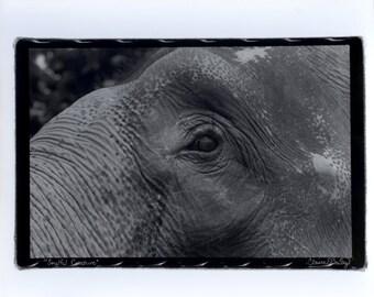 "Elephant Print - Film Photography - 8x10"" - Fiber Based Paper"