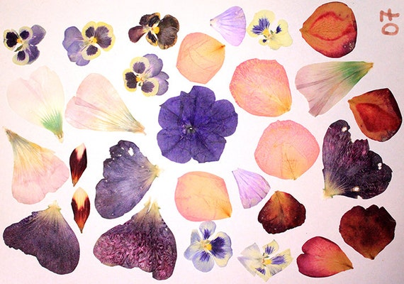 flower supplies dry flower petals craft projects by sweetline