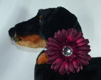 Burgundy Flower - Dog Collar Accessory