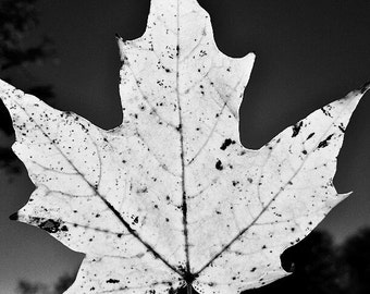 Instant Download-Black and White Leaf at Night