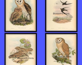 Set of four bird prints from the 1800's Plates 57,58,59, and 60