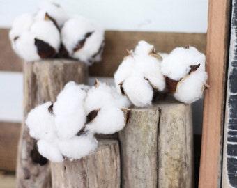 Driftwood Vase + Cotton Bolls: mantle piece/wedding centerpiece/cotton/country
