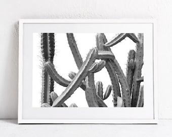 Black and White Print Photography Download, Cacti Print Plant Print, Cacti Art Large Wall Art, Printable Art Horizontal Wall Art Photo Print