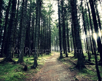 Into the woods - hike in the woods, walk, near munich, Bavaria