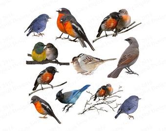 Bird Clipart Png, Bird Png Clipart, Birds Clipart Png, Birds Png Clipart, Bird Clipart, Bird Clip Art