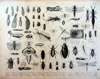 Types of insects antique print, 1859 entomology engraving of beetles print, ants dragonfly grasshopper cricket mantis silverfish plate.