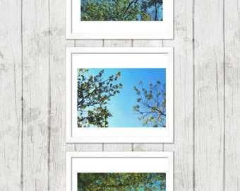 Tree Branches Wall Art Set, Art Nature Photography, Wall Art, Home Decor, Summer, Green and Blue Art, Photography Set, Wall Art Set