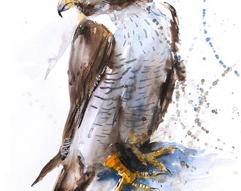 Fine Art Print of My Original Falcon Watercolour Painting Signed A3 A4 New Giclee High Quality Vibrant Impressionist Wildlife Bird Animal