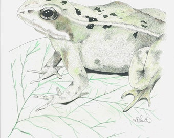 Not So Common Frog - Original