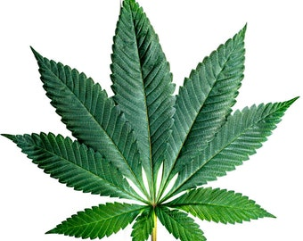 the real harm in marijuana Substantial evidence from animal research and a growing number of studies in humans indicate that marijuana can marijuana use during and after pregnancy harm.
