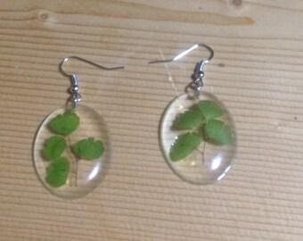 Maidenhair Resin Botanical Earrings
