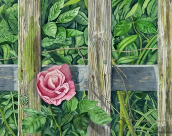 Pink Rose Watercolor Print, Urban Rustic Rose, Greenery Print, Urban Rustic Decor, Rose Print, Pink Home Decor, Weathered Fence
