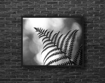 Fern Photo - Fern Leaf Photo - Minimalist - Leaf - Botanical Photo - Black and White - Botanical Wall Art - Wall Decor - Living Room Decor