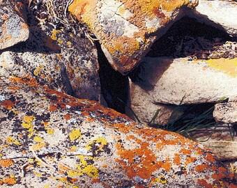 Rocky Mountain Moss Rock. Southwestern Colorado in the Fall.