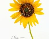 sunflower photo, sunflower wall art, sunflower art, summer art, summer decor, yellow wall art, sunflower print, kitchen decor, yellow art