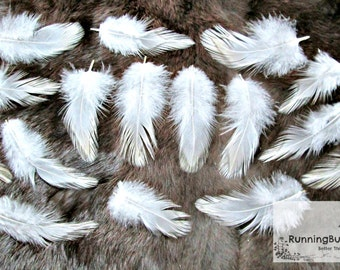 """Real White Feathers Natural Cruelty Free Real Bird Feathers White Wyandoote Rooster Chicken Feathers For Crafts Eco USA 25 @ 3 - 3.5"""" / WW9"""
