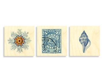 Prints on Wood, Beach art, cottage art, wall art, art prints, shells, Costa Rica