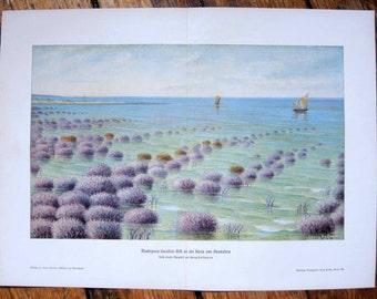 1900 CORAL REEF LITHOGRAPH original antique ocean sea landscape lithograph - australia great barrier reef