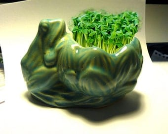MICRO-GREEN KITS for Growing Your Own Indoor-Vitamin-Rich Chia Garden in Mid-Century Planters